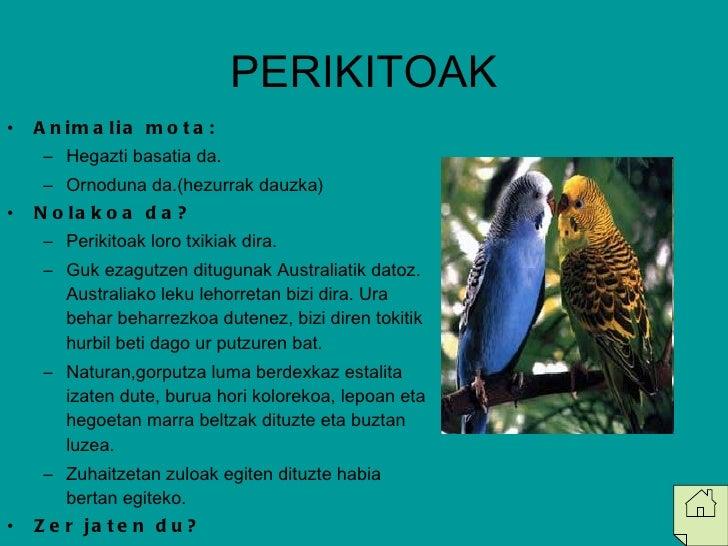 PERIKITOAK <ul><li>Animalia mota: </li></ul><ul><ul><li>Hegazti basatia da. </li></ul></ul><ul><ul><li>Ornoduna da.(hezurr...