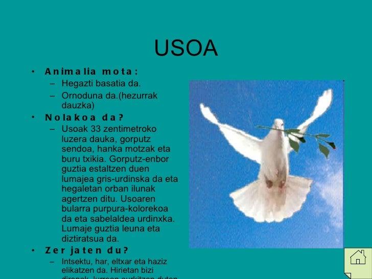 USOA <ul><li>Animalia mota: </li></ul><ul><ul><li>Hegazti basatia da. </li></ul></ul><ul><ul><li>Ornoduna da.(hezurrak dau...
