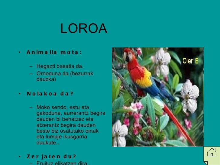 LOROA  <ul><li>Animalia mota: </li></ul><ul><ul><li>Hegazti basatia da. </li></ul></ul><ul><ul><li>Ornoduna da.(hezurrak d...