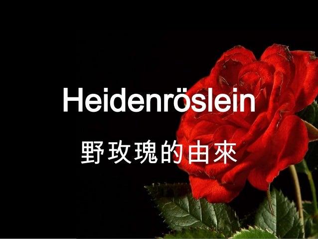 Heidenröslein 野玫瑰的由來