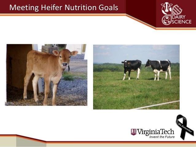Meeting Heifer Nutrition Goals