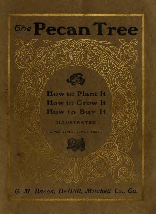 Pecan Tre               ow to             Plant   I            Howto Grow                   It            How to Buy      ...