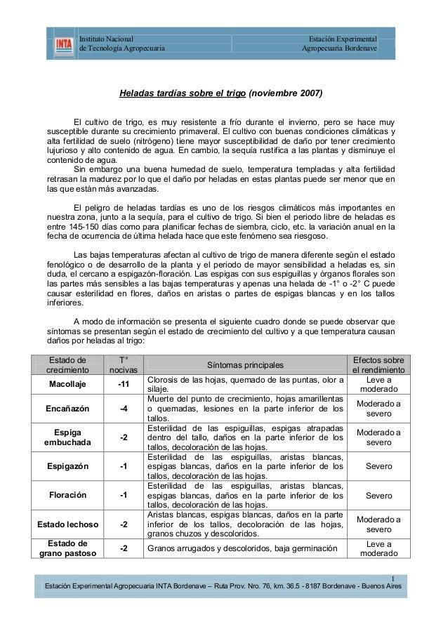 Instituto Nacional de Tecnología Agropecuaria  Estación Experimental Agropecuaria Bordenave  Heladas tardías sobre el trig...