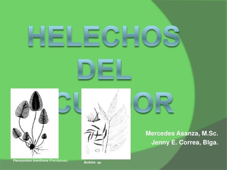 Mercedes Asanza, M.Sc.                                                       Jenny E. Correa, Blga.Pterozonium brevifrons ...