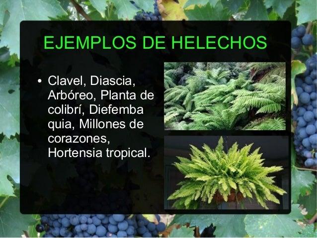 Helechos - Cuidados de los helechos ...