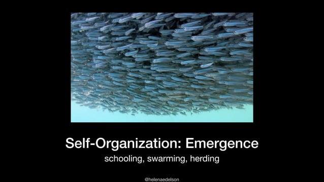 @helenaedelson Self-Organization: Emergence schooling, swarming, herding