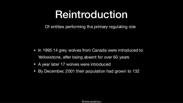 @helenaedelson Reintroduction • In 1995 14 grey wolves from Canada were introduced to Yellowstone, after being absent for ...