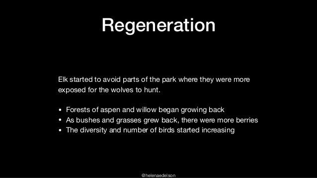 @helenaedelson Regeneration Elk started to avoid parts of the park where they were more exposed for the wolves to hunt.  •...