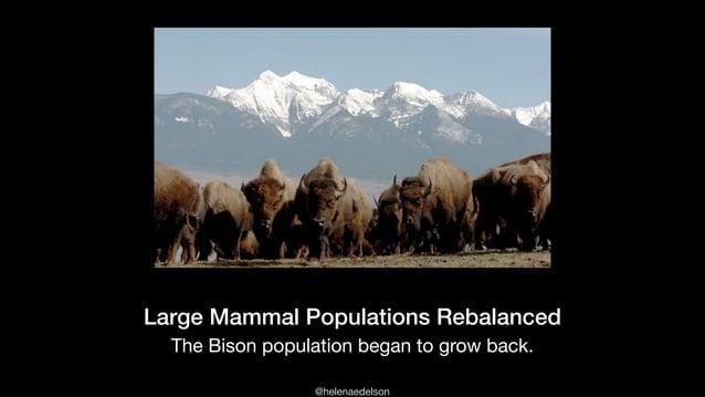 @helenaedelson The Bison population began to grow back. Large Mammal Populations Rebalanced
