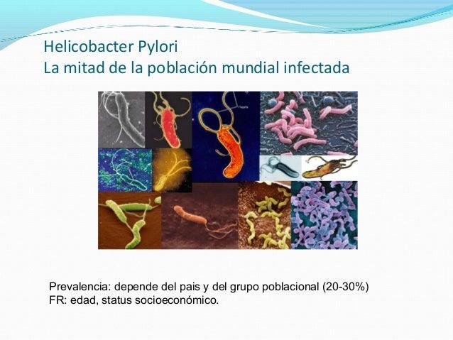 Helicobacter Pylori  La mitad de la población mundial infectada  Prevalencia: depende del pais y del grupo poblacional (20...