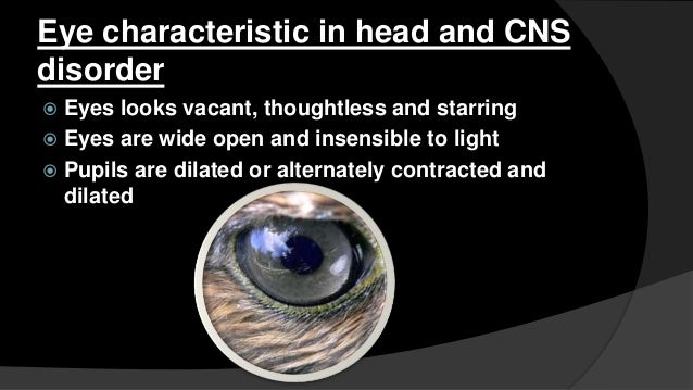 Characteristics of headache  There is stupefying headache  Forehead has wrinkled folds and is covered with sweat