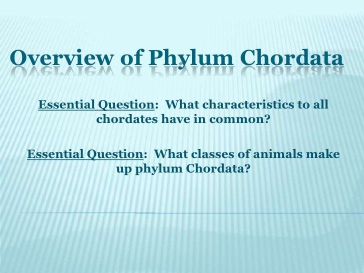 Overview of Phylum Chordata<br />Essential Question:  What characteristics to all chordates have in common? <br />Essentia...
