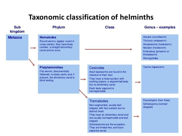 Helminth introduction