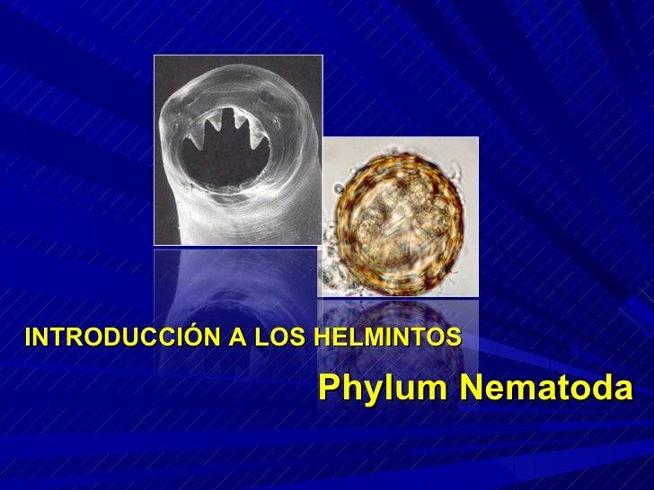 INTRODUCCIÓN A LOS HELMINTOS Phylum Nematoda