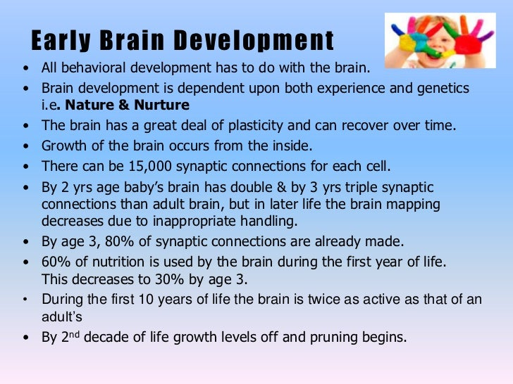 infant brain development As long as there have been babies, there have been parents, said michael goldstein, a language development researcher at cornell university the baby's brain has.