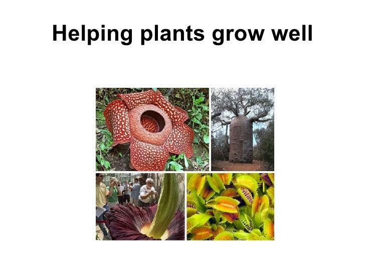 Helping plants grow well