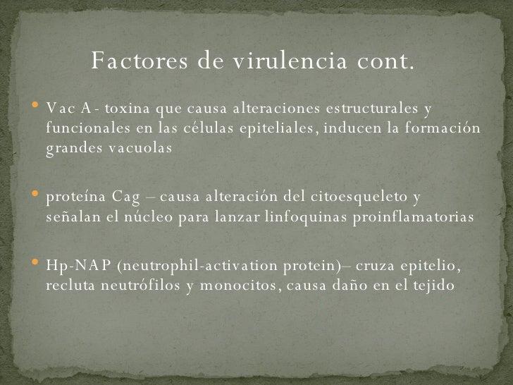 Factores de virulencia cont.  <ul><li>Vac A- toxina que causa alteraciones estructurales y funcionales en las células epit...