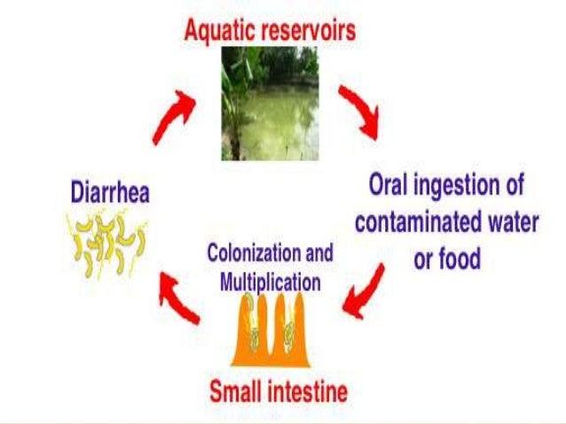 Cholera And Diarrhoea