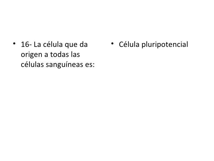 <ul><li>16- La célula que da origen a todas las células sanguíneas es: </li></ul><ul><li>Célula pluripotencial </li></ul>