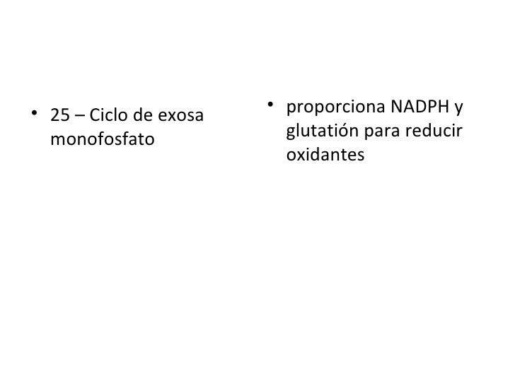 <ul><li>25 – Ciclo de exosa monofosfato  </li></ul><ul><li>proporciona NADPH y glutatión para reducir oxidantes   </li></ul>
