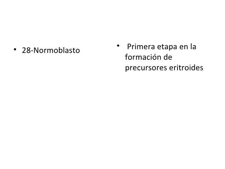 <ul><li>28-Normoblasto </li></ul><ul><li>Primera etapa en la formación de precursores eritroides </li></ul>