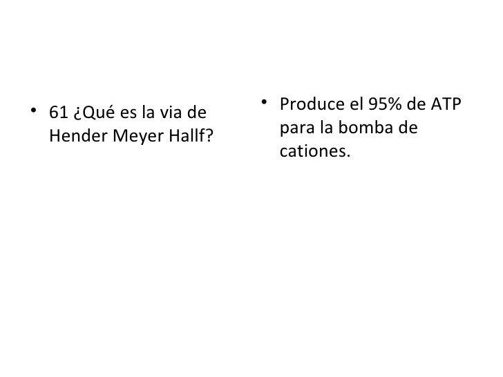 <ul><li>61 ¿Qué es la via de Hender Meyer Hallf? </li></ul><ul><li>Produce el 95% de ATP para la bomba de cationes. </li><...