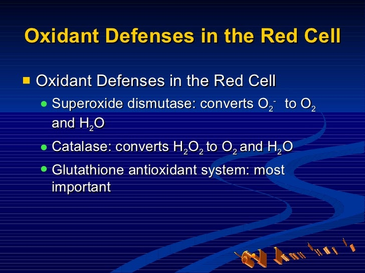 Oxidant Defenses in the Red Cell <ul><li>Oxidant Defenses in the Red Cell </li></ul><ul><ul><li>Superoxide dismutase: conv...