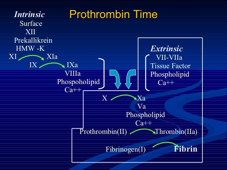Prothrombin Time Intrinsic Surface XII Prekallikrein HMW -K XI  XIa IX  IXa VIIIa Phospoholipid Ca++ Extrinsic VII-VIIa Ti...