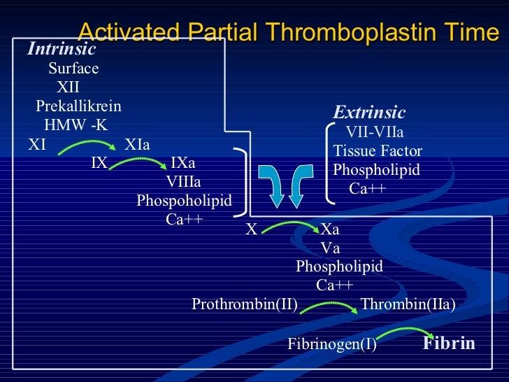 Activated Partial Thromboplastin Time Intrinsic Surface XII Prekallikrein HMW -K XI  XIa IX  IXa VIIIa Phospoholipid Ca++ ...