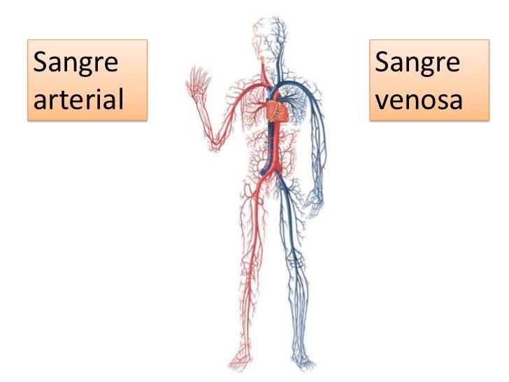 Sangre arterial <br />Sangre venosa <br />