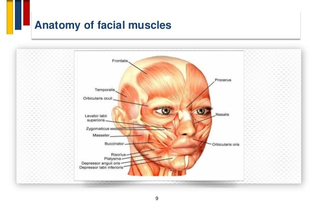 Facial Spasms In Adults