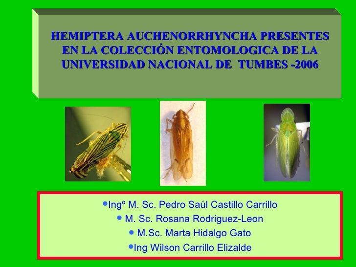 <ul><li>Ingº M. Sc. Pedro Saúl Castillo Carrillo </li></ul><ul><li>M. Sc. Rosana Rodriguez-Leon </li></ul><ul><li>M.Sc. Ma...