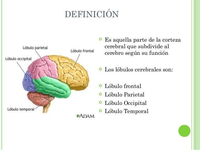 Otras estructuras importantes del cerebro