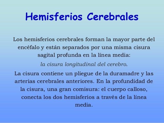 Hemisferios Cerebrales Los hemisferios cerebrales forman la mayor parte del encéfalo y están separados por una misma cisur...