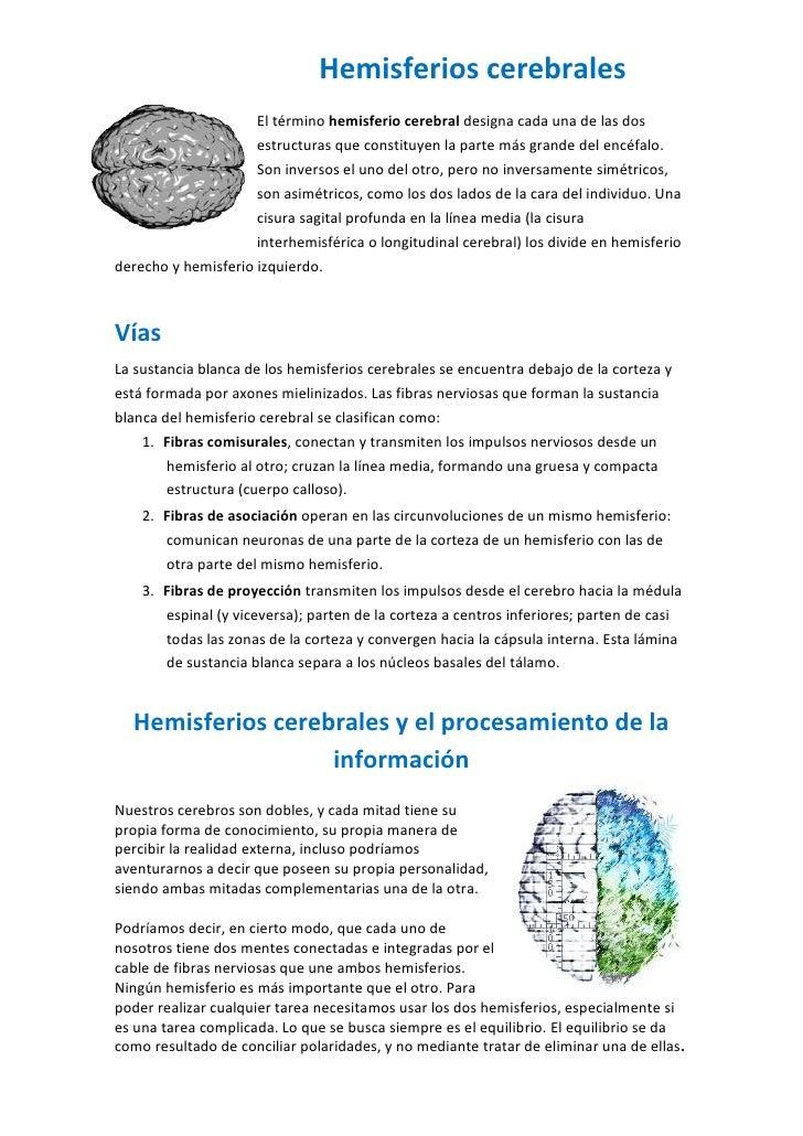 Hemisferios cerebrales                     El término hemisferio cerebral designa cada una de las dos                     ...