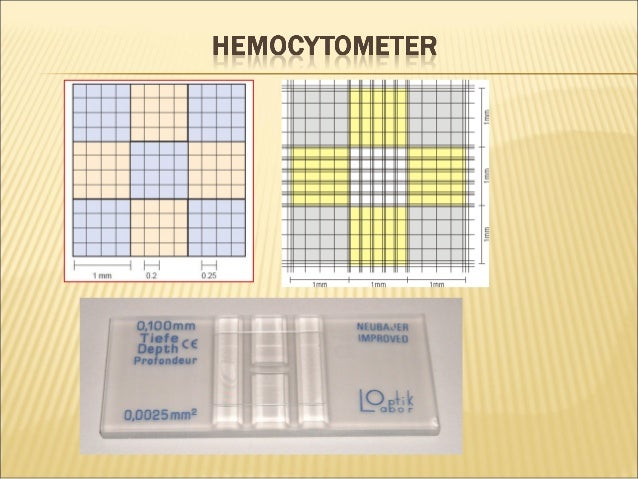 Hemocytometer manual cell counting (1)