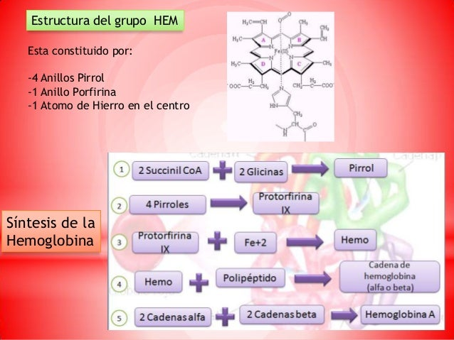 Hemoglobina Y Sintesis De La Bilirrubina