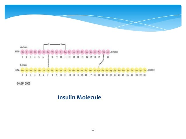 insulin sythesis Start studying synthesis and release of insulin learn vocabulary, terms, and more with flashcards, games, and other study tools.
