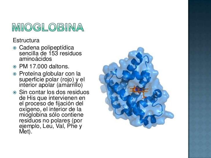 Hemoglobina Y Mioglobina Estructura Características