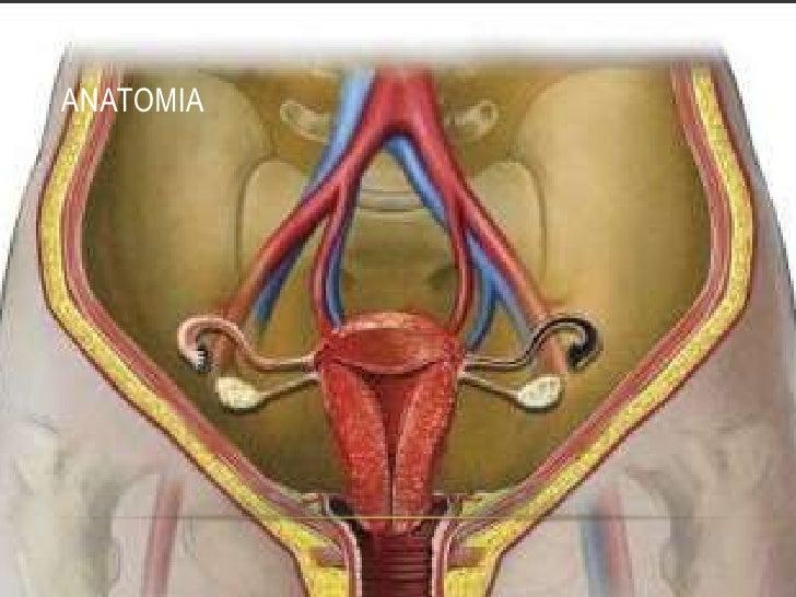 Hemorragia obstetrica Slide 3
