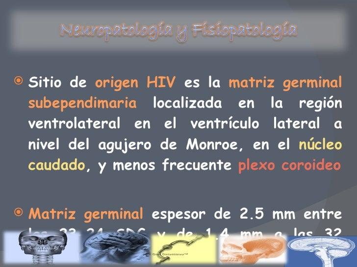 Moderno Anatomía Matriz Germinal Ilustración - Anatomía de Las ...