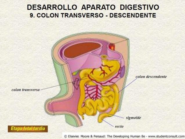 Colitis ulcerativa cronica inespecifica
