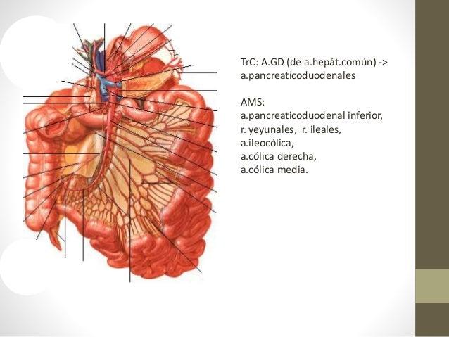 Las medicinas eficaces a la várice varicosa