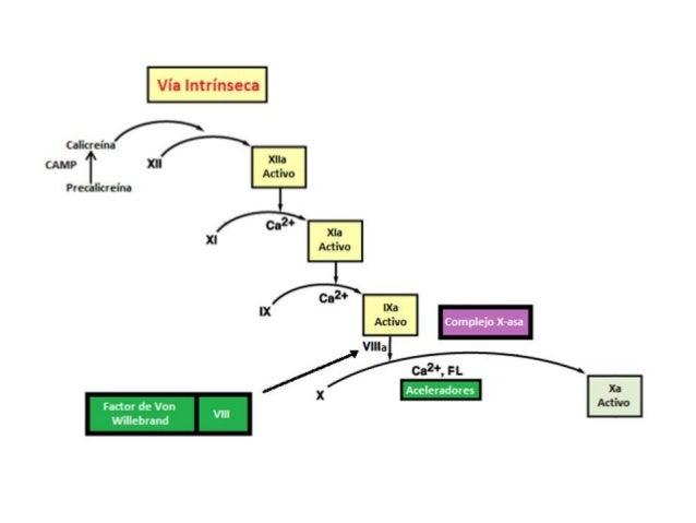 ANAMNESIS   Características del Foco Hemorrágico               Número de focos Tipo Gravedad Duración de epis...