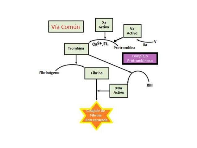 EXPLORACIÓN FÍSICA  Hemorragias Mucocutáneas  Defectos en interacción entre plaquetas y pared vascular.  Epistaxis  Eq...