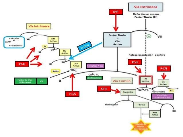 Tiempo de Hemorragia   Valora función de plaquetas y su interacción con pared vascular.  Normal = 4-8 min.  ↑ indica tr...