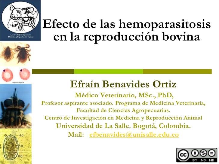 Efecto de las hemoparasitosis  en la reproducción bovina             Efraín Benavides Ortiz             Médico Veterinario...