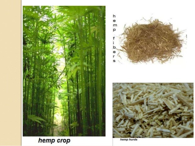 traces of hemp use found in ancient mesopotamia Hemp was the first plant known to have been domestically cultivated the oldest relic of human history is hemp fabric dated to 8,000 bc from ancient mesopotamia, an.