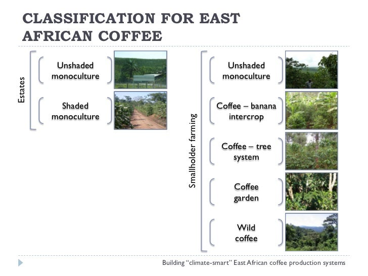 Coffee Certification in East Africa - Impact on Farms, Families and Cooperatives