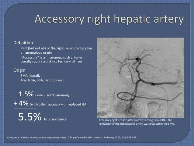 Right hepatic artery anatomy